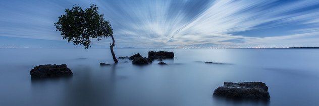 Deception Bay Tree